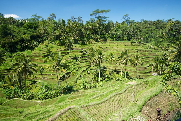 Tegallalang Jatiluwih rice terraces in bali