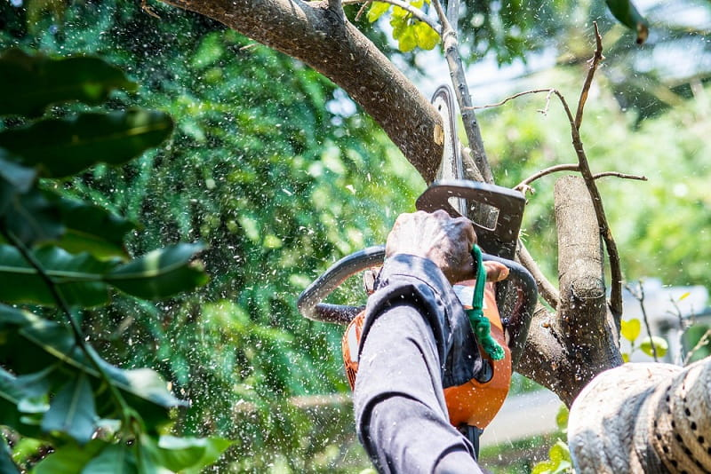 How Much Does Tree Removal Cost - This Is What You Can Expect