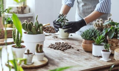 How-to-Take-Care-of-Succulents-Indoors-and-Out